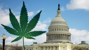 Poll: 65% of D.C. Voters Support Initiative to Legalize Cannabis