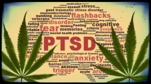 New Jersey: Bill Filed to Add PTSD as Qualifying Medical Cannabis Condition