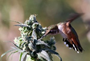 7 Ways to Keep Pests off Marijuana Plants