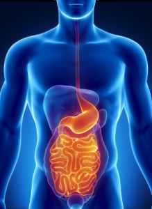 Study: Cannabis Holds Promise as a Treatment for Digestive Disorders