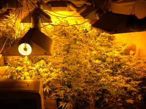 Odor Management For Your Grow Room