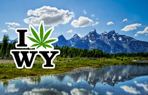 Poll: 72% of Wyoming Residents Support Legalizing Medical Cannabis, 62% Support Decriminalization