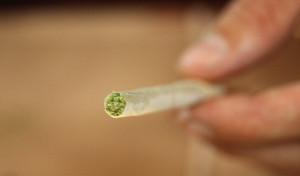 Daily, Long-Term Cannabis Use Not Associated with Adverse Changes in Lung Health