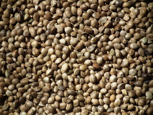 University of Hawaii Receives Approval from DEA to Import Hemp Seeds from Australia