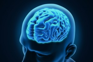 Study: Daily Cannabis Use Has No Effect on Brain Volume or Shape