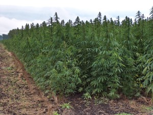 North Dakota House Committee Votes Unanimously to Legalize Hemp
