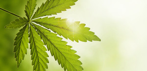 Study: Cannabis May Protect Against Colitis