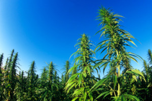 Missouri Bill to Legalize Hemp Approved by House Commerce Committee