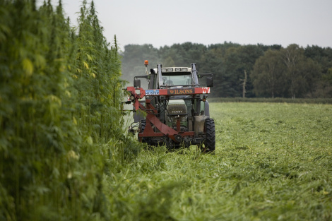 Louisiana Hemp Bill Passed by House of Representatives