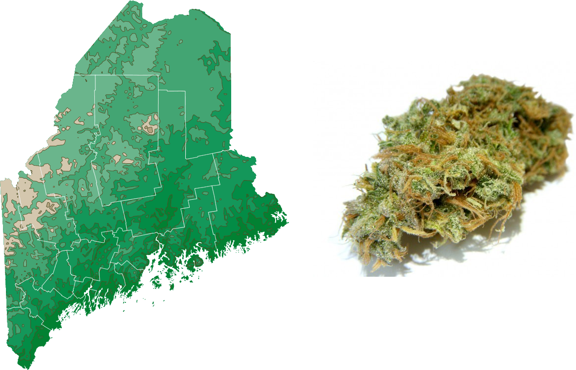 Initiative to Legalize Cannabis Placed on November Ballot in Maine