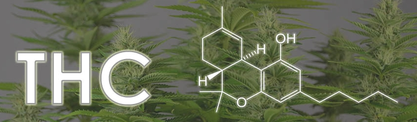 What is THC, Really?