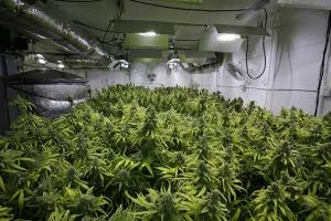 Nico's Nuggets: CO2, Ventilation & Controllers for Small Grow Ops