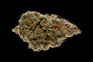 Winners of the 2016 Michigan Medical Cannabis Cup
