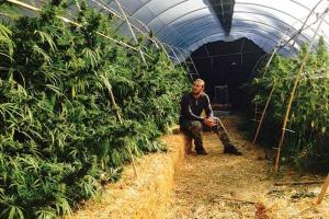 The Secrets of Light Deprivation for Greenhouses