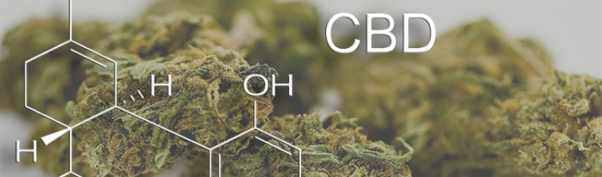 CBD (Cannabidiol) In Marijuana