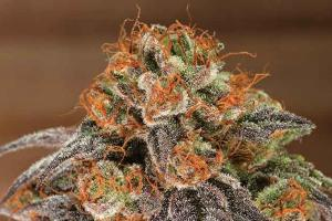 The Strongest Strains on Earth 2016