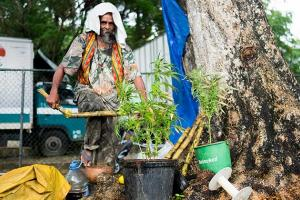 Jamaica Wants Tourists to Buy Weed in Airports