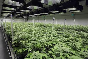 State Finds Undisclosed Pesticides in Pot Growing Products