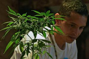 Colombia: First Medical Marijuana License Granted — Amid Dissent