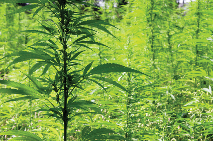 Pennsylvania Legislature Votes 233 to 0 to Legalize Hemp Research