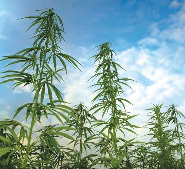 Pennsylvania: After 233 to 0 Vote in Legislature, Governor Signs Hemp Bill