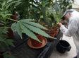 Feds To Make Major Announcement On Marijuana Regulation