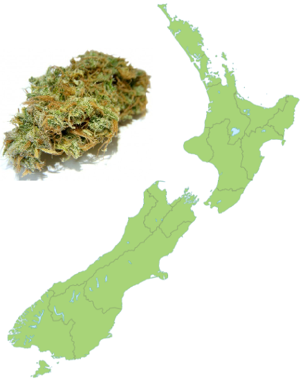 Poll: 64% of those in New Zealand Support Legalizing or Decriminalizing Cannabis