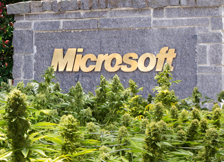 Why Microsoft is Joining the Marijuana Industry and Why the DEA Won't Stop it