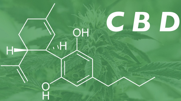 Study: CBD has Longer Treatment Window for Newborn Brain Damage than Other Treatments