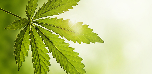 Study: Cannabinoids May Improve Cognitive Performance During Early Tobacco Withdrawal