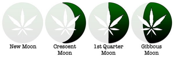 Using the Moon to Grow Cannabis