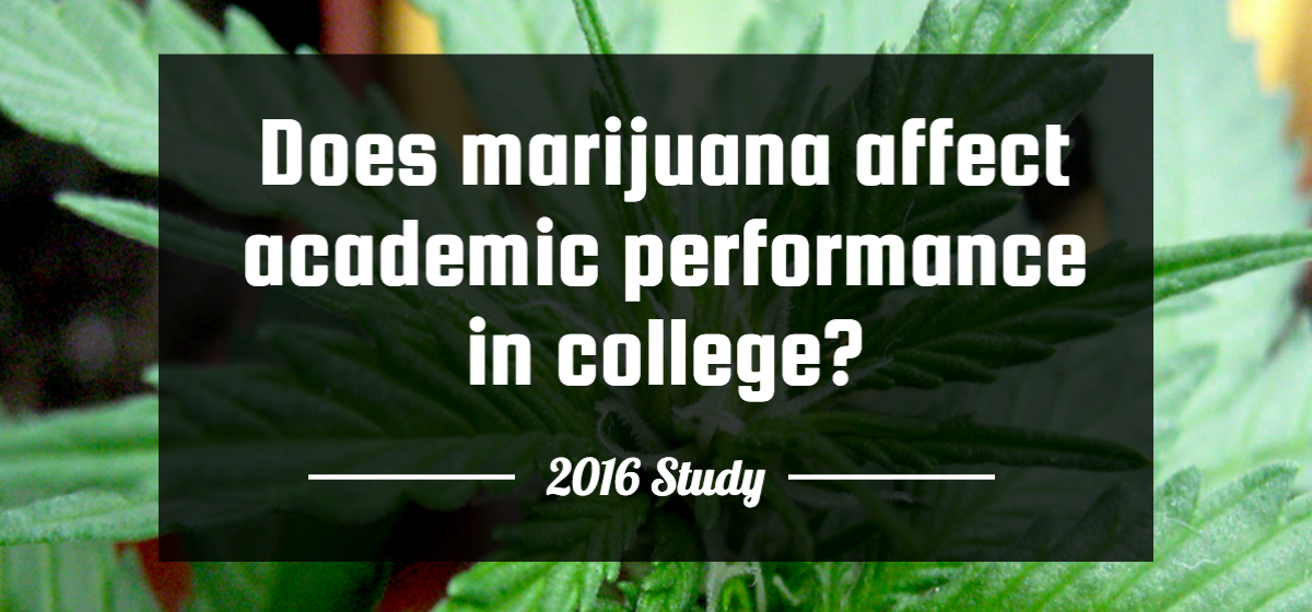 Study: Daily College Cannabis Consumers Have Higher Average GPA than Average for All Students