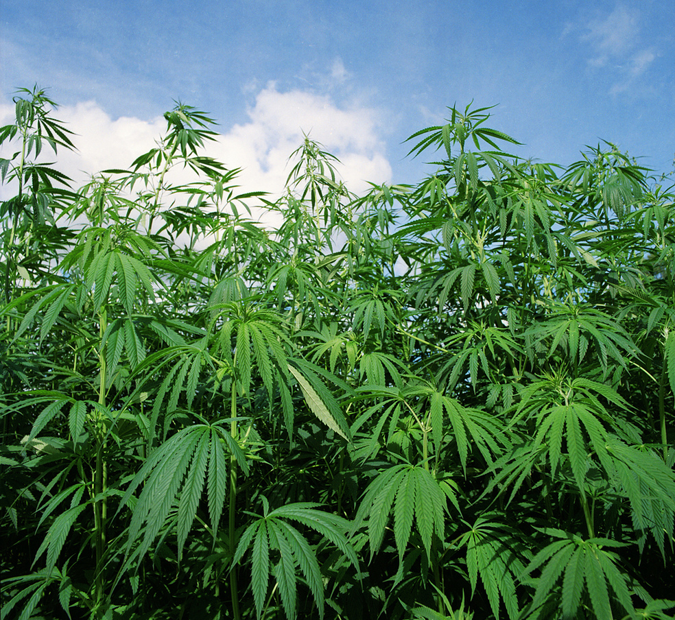 Bill to Legalize Hemp, Explicitly Ignore Federal Law, Filed in Missouri