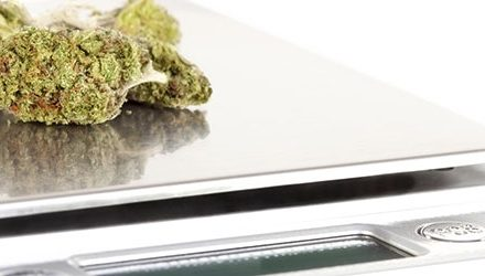 The Best Weed Scales