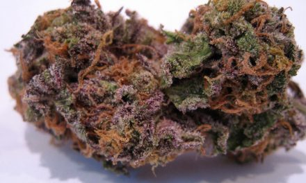 Granddaddy Purple Marijuana Strain Overview