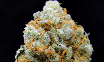 Strawberry Banana Marijuana Strain Overview