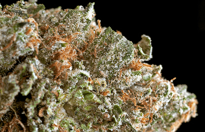 Batman OG Marijuana Strain Overview