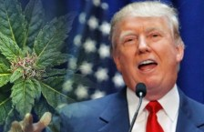 Why the Trump Administration Will NOT Attack Legal Marijuana States