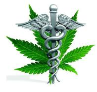 Study: Marijuana Extract Associated With Improved Survival Rates In Glioma Patients