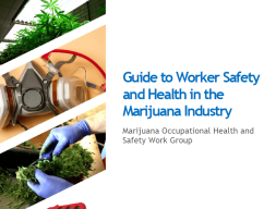 Colorado Releases Guide to Marijuana Workers Safety and Health