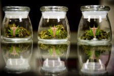 Study: Legalizing Medical Marijuana Associated with Reduced Opioid-Related Hospitalizations