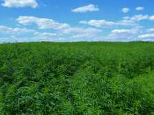 "West Virginia Senate Passes Resolution Making Today ""West Virginia Industrial Hemp Day"""