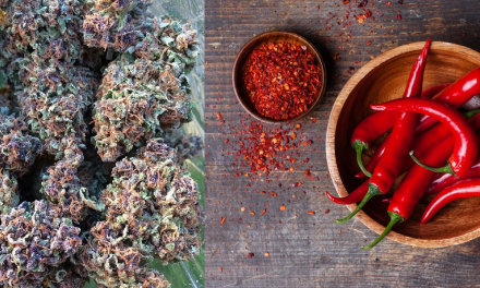 Marijuana and Chili Peppers Calm Gut's Immune System, May Treat Type 1 Diabetes and Colitis