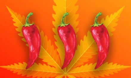 Study Shows Gut-Calming Effects Of Chili Peppers And Marijuana