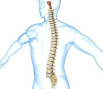 Study: Infusion of Cannabinoids in Spinal Canal Effective at Blocking Pain