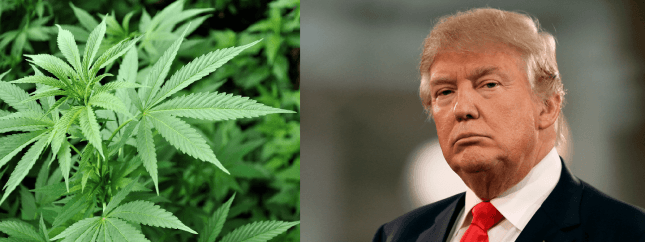 Almost 6 Months Into Trump Presidency, Little to No Effect on Marijuana Laws