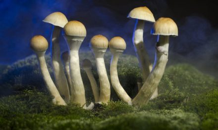 Will California Become The First State To Decriminalize Psychedelic Mushrooms?
