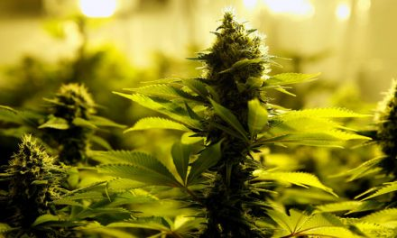 Marijuana's Popularity Among US Adults Continues To Grow. Here's Why