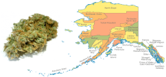 Alaska Garners Nearly $600k in Marijuana Taxes for July, Highest Month Yet