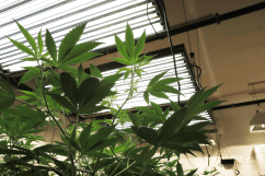 Setting Up an Efficient Grow Room: 5 Key Considerations